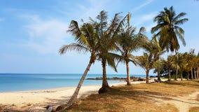 Palmen bij het Strand in Thailand stock afbeelding