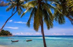 Palmen bij het strand van Haad Yao Stock Afbeeldingen