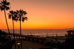 Palmen bij het Strand van Los Angeles Stock Afbeeldingen