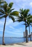 Palmen bij het strand van Miami, Florida Stock Afbeeldingen