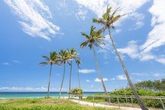 Palmen bij Hoofdstrand op de Gouden Kust, Queensland, Australië royalty-vrije stock foto