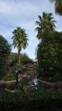 Palmen bij Jackalope-Boerderij in Indio Royalty-vrije Stock Foto