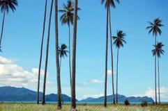 Palmen bij kust overzeese baaimening Stock Foto