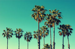 Palmen bij Santa Monica-strand stock afbeeldingen