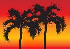 Palmen bij Zonsondergang Royalty-vrije Stock Afbeeldingen