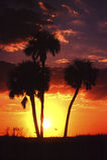 Palmen bij Zonsondergang royalty-vrije stock foto