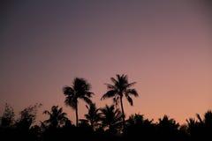 Palmen bij zonsondergang in Guam stock foto's