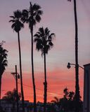 Palmen bij Zonsondergang stock afbeelding