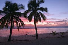 Palmen bij Zonsondergang op een Tropisch Strand Royalty-vrije Stock Afbeelding