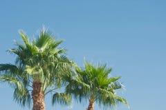 Palmen in blauwe hemel Stock Foto's