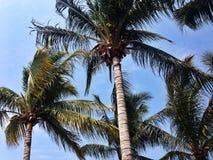 Palmen, blauwe hemel, warme dag, strand Stock Fotografie