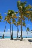 Palmen, Blauwe Wateren, GLB Cana, de Dominicaanse Republiek van Punta Cana Royalty-vrije Stock Foto