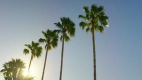 Palmen ble Himmelruhe-Tageslangsame Neigung unten stock footage