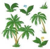 Palmen, bloemen en gras Royalty-vrije Stock Foto's