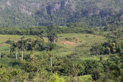 Palmen, bos en heuvels in Cuba Royalty-vrije Stock Foto