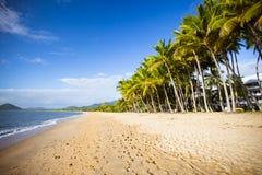 Palmen-Bucht strandnah Stockfoto
