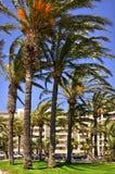 Palmen in Cannes in Frankreich stockbilder