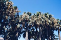 Palmen in Cannes, Frankreich lizenzfreie stockfotos
