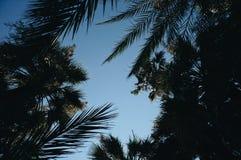 Palmen in Cannes, Frankreich stockfotos