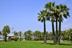 Palmen in Cannes in Frankreich lizenzfreie stockfotografie