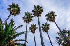 Palmen in Cannes op de kooi D 'azur royalty-vrije stock fotografie
