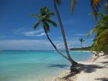 Palmen in Caraïbisch strand royalty-vrije stock foto's
