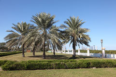 Palmen am corniche in Abu Dhabi Lizenzfreie Stockfotos