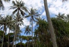 Palmen in de Bewolkte Hemel Stock Foto's