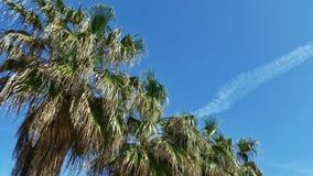 Palmen in de blauwe hemel Stock Foto's