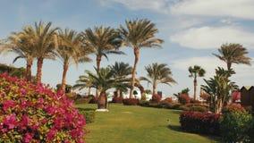 Palmen in de blauwe hemel als achtergrond keerkringen in de zomer stock footage