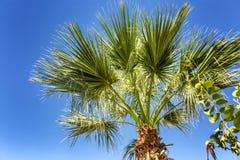 Palmen in de blauwe hemel, palmen op de tropische kust royalty-vrije stock afbeeldingen