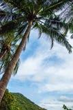 Palmen in de blauwe zonnige hemel Stock Afbeeldingen