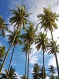 Palmen in de blauwe zonnige hemel met zacht licht Royalty-vrije Stock Afbeeldingen