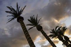Palmen in de hemel royalty-vrije stock afbeeldingen