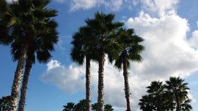 Palmen in de hemel stock foto's