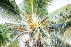 Palmen in de keerkringen op een hete de zomerdag Toerisme in exotisch Stock Fotografie