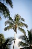 Palmen in de keerkringen op een hete de zomerdag Toerisme in exotisch Royalty-vrije Stock Foto