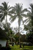 Palmen in de keerkringen op een hete de zomerdag Toerisme in exotisch Stock Foto's