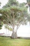 Palmen in de keerkringen op een hete de zomerdag Toerisme in exotisch Stock Afbeelding
