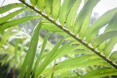 Palmen in de keerkringen op een hete de zomerdag Toerisme in exotisch Stock Foto