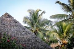 Palmen in de keerkringen op een hete de zomerdag Toerisme in exotisch Royalty-vrije Stock Afbeeldingen