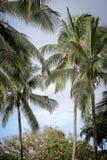 Palmen in de keerkringen op een hete de zomerdag Toerisme in exotisch Royalty-vrije Stock Afbeelding