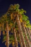 Palmen in de nacht Stock Afbeelding