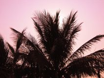 Palmen in de Tijd van de Avond Royalty-vrije Stock Foto's