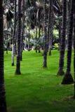 Palmen in de tuin Royalty-vrije Stock Afbeelding