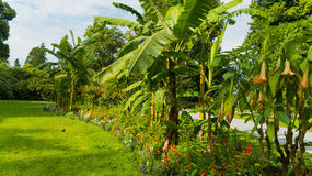 Palmen in de tuin Stock Afbeelding
