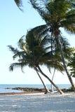 Palmen in de Wind Stock Fotografie