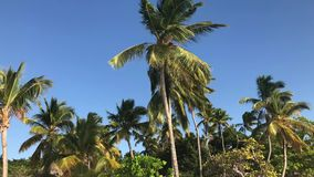 Palmen in de wind stock videobeelden