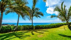 Palmen in de wind onder blauwe hemel bij de oceaan Stock Foto's