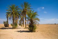 Palmen in de woestijn royalty-vrije stock fotografie